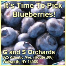 You pick Blueberries at G & S