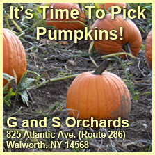 You pick pumpkins at G & S