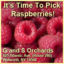 Pick Your Own Rapsberries