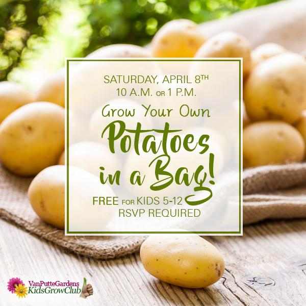 Plant Your Own Potatoes In A Bag Kids Out And About Rochester