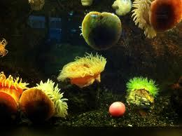 Aquarium Of Niagara Seaster Egg Hunt Kids Out And About