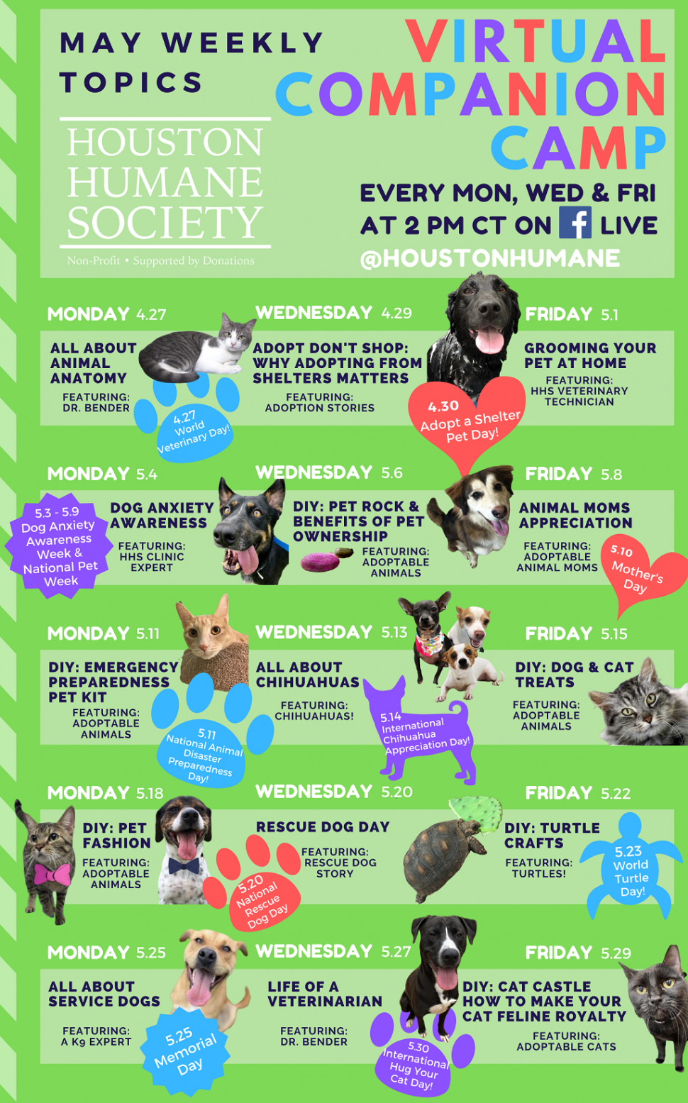 Virtual Event Virtual Companion Camp At 2pm Central With Houston Humane Society Kids Out And About Rochester