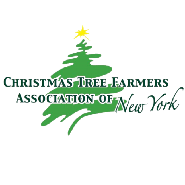 Christmas Tree In Ny: Holiday & Christmas Light Displays In The Rochester Area
