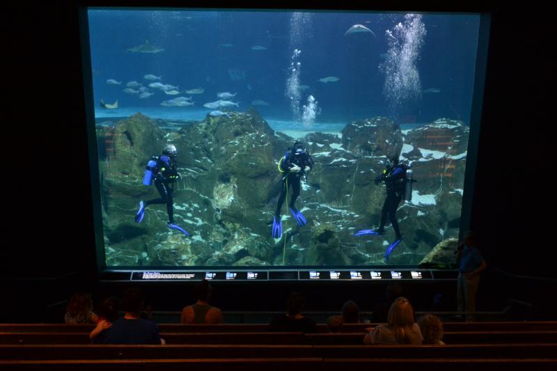 Adventure Aquarium: a KidsOutAndAbout