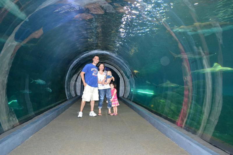Adventure Aquarium: a KidsOutAndAbout review  Kids Out and About Rochester